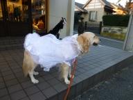 犬服仮縫い
