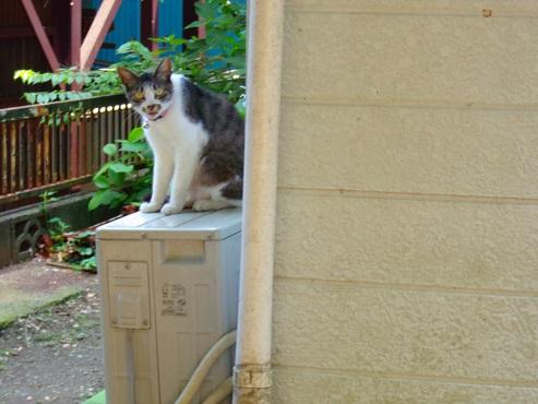 通りすがりに見かけた猫(755)