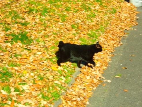 通りすがりに見かけた猫(756)