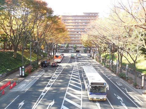 ふれあい通の公園大橋@東京都新宿区i