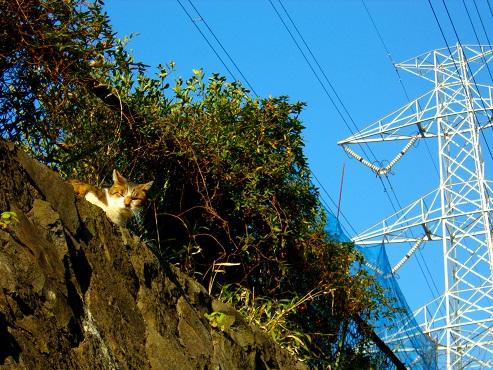 通りすがりに見かけた猫(757)