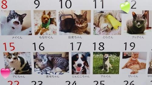 カレンダー届く♪
