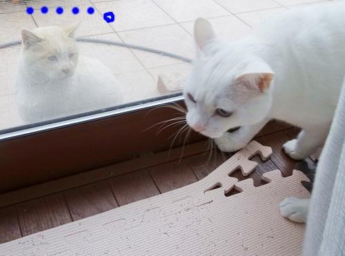 窓辺の攻防?