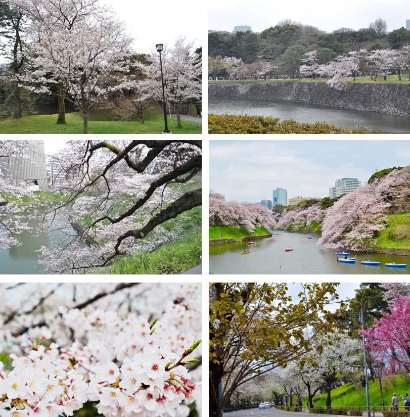 2016の桜