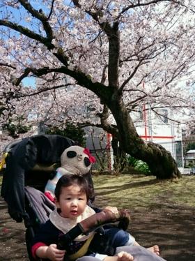 おばぶとこばぶと桜