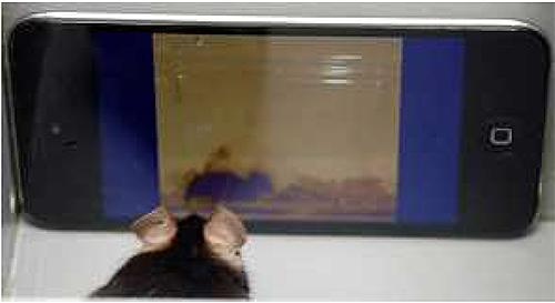 マウスはアダルトビデオが好きで、サルはメスのお尻が好きで、コレラ菌はタウリンが好き