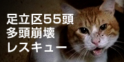 adachi-55-cats.jpg