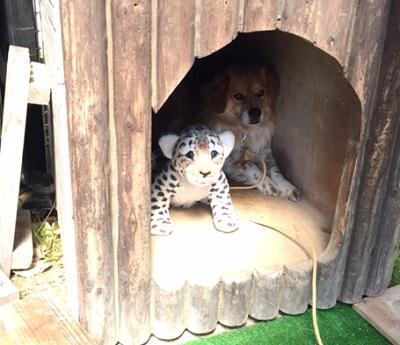 トラと小トラ2
