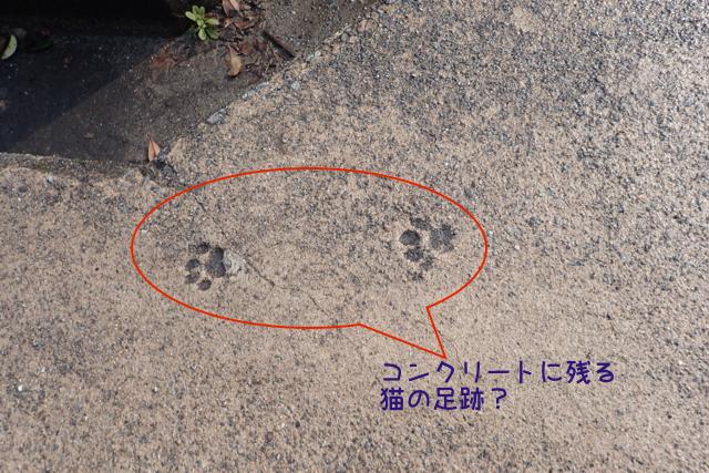 猫の足跡 コンクリート