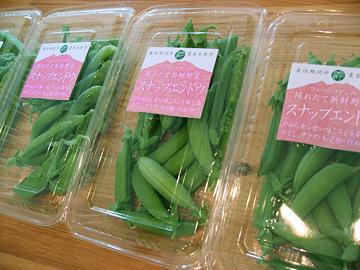 2016春野菜3