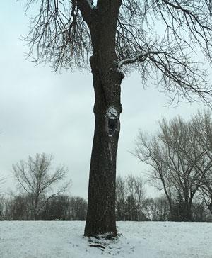 screamingtree1.jpg