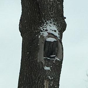 screamingtree2.jpg