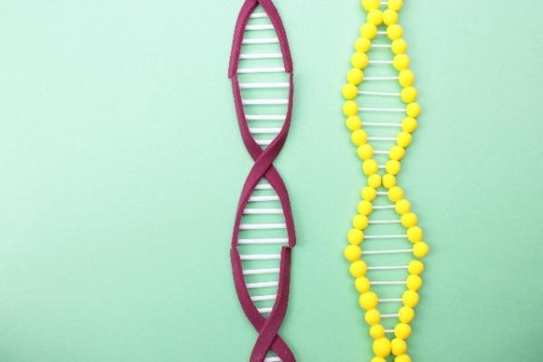 DNA617835.jpg