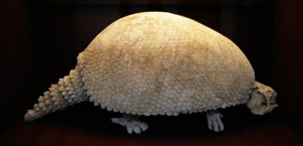 Glyptodon-1.jpg