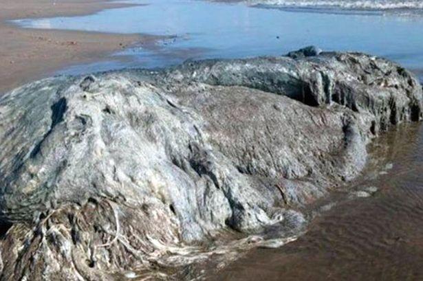 【UMA】メキシコの海岸に「巨大な怪物のような謎の生物」が打ち上げられる!大きさは約4メートル