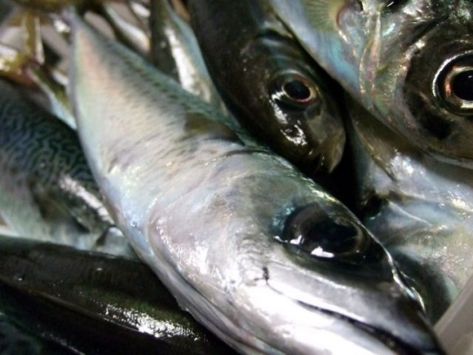 fish_Taste_aji3254.jpg