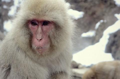 monkey61816852.jpg
