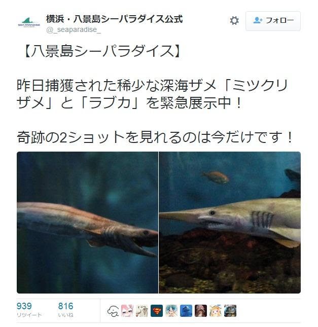 【深海サメ】5日に相模湾で捕獲されていた「ミツクリザメ」と「ラブカ」2匹とも死ぬ…横浜・八景島シーパラダイス