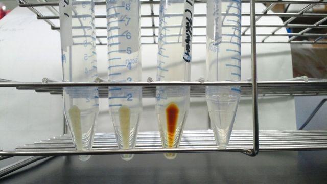 アメリカ・ベンター研究所「ゲノムを人工的にデザイン設計し、自然界に存在しない細菌の作製に成功した」