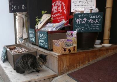江ノ島ネコ様
