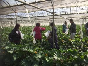 野菜収穫サイクリング7