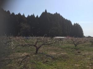 野菜収穫サイクリング11