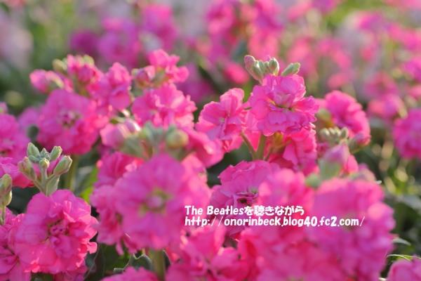 IMG_2015_12_16_4350.jpg