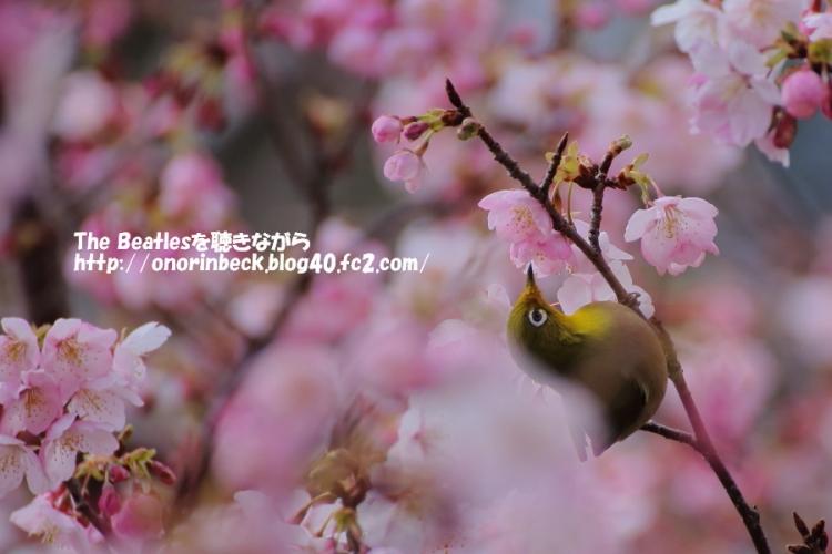 IMG_2016_03_02_9999_67.jpg