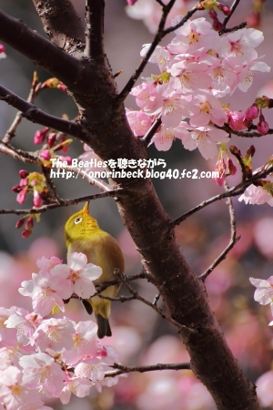 IMG_2016_03_02_9999_70.jpg