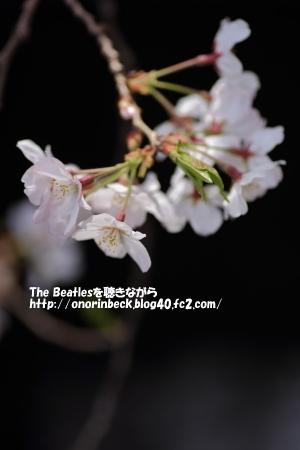 IMG_2016_03_31_9999_127.jpg