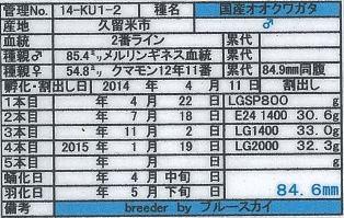 web-14-KU1-2♂846