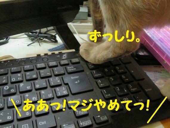 20160223-05.jpg