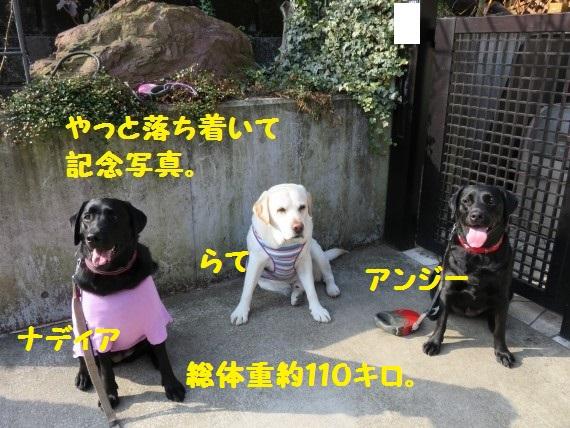 20160310-004.jpg