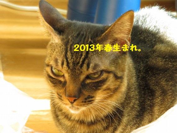 20160311-0007.jpg
