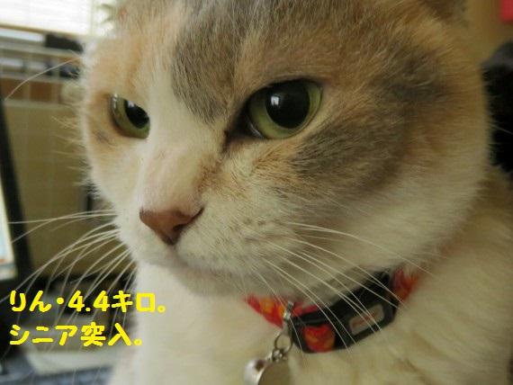 20160329-0003.jpg