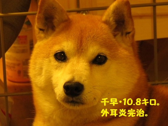 20160329-0007.jpg