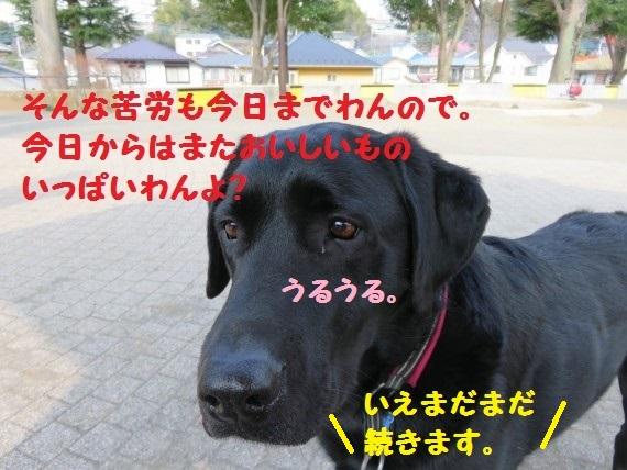 20160329-0011.jpg
