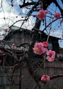4度目の春