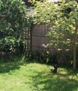 お庭のふう