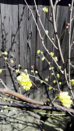 2016 春
