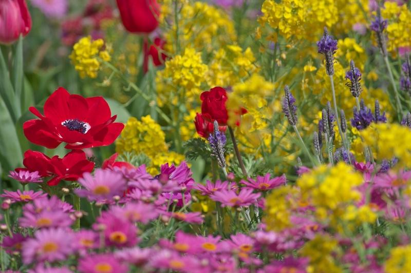 長居植物園 早春の草花展