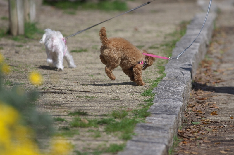長居公園 犬の散歩
