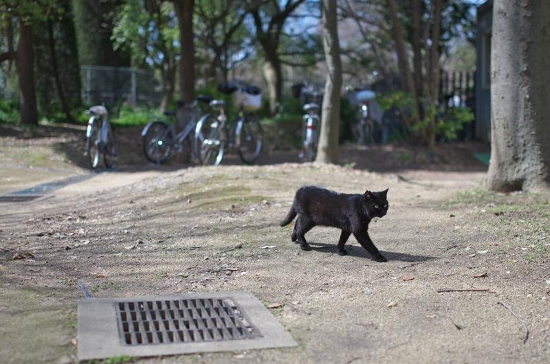 長居植物園 黒猫