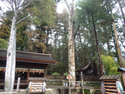 諏訪湖ーん (9)
