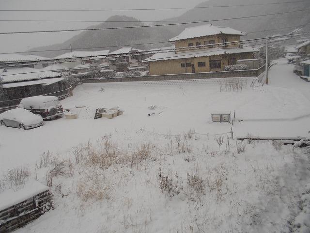 史上最高の雪