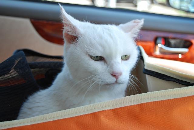 車の中で待っとったよね?