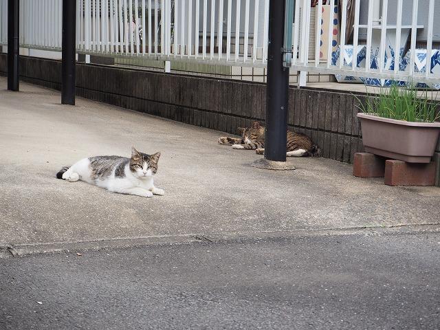 猫に優しい環境