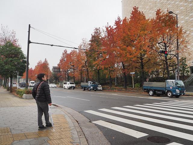 街路樹紅葉