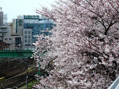 満開の桜越しに望むWINS名古屋