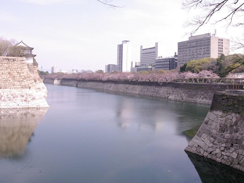 大阪城 桜並木